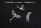 Maifliegen-Flügel